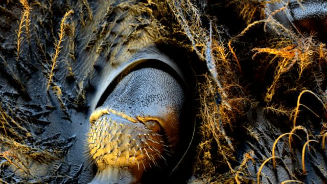 honeybee sem - micrografia elettronica a scansione video stock e b–roll