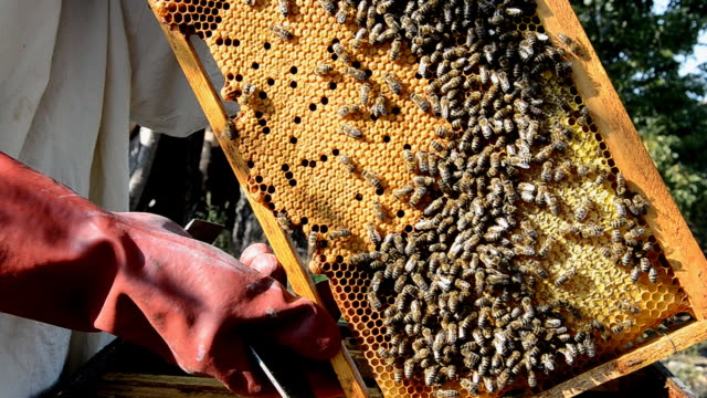 honeycomb (hd) - animal markings stock videos & royalty-free footage