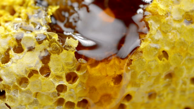honeycomb - bee stock videos & royalty-free footage