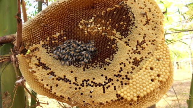 vidéos et rushes de nid d'abeille avec super-zoom-in d'effet - ruche