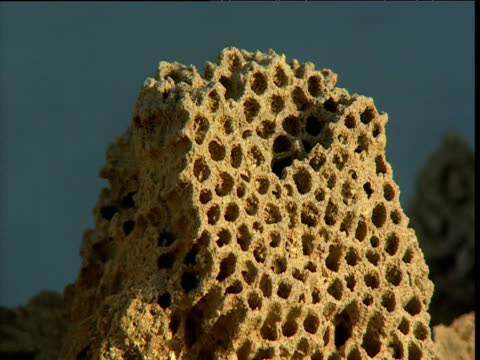 Honeycomb-like fossilized coral