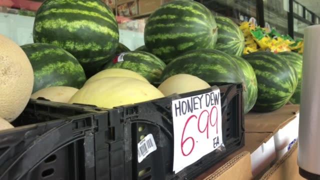 vídeos de stock, filmes e b-roll de honeydew and watermelon video - melão musk
