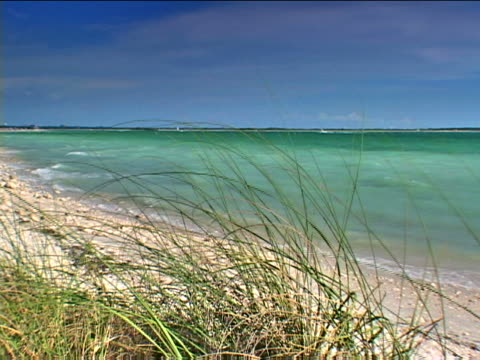 honeymoon island: honeymoon island state park beach - florida us state stock videos & royalty-free footage