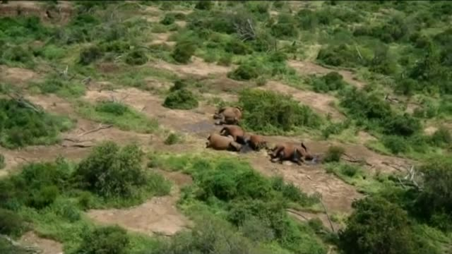 all ivory sales to be banned t09011302 / 922013 kenya tsavo national park bodies of slaughtered elephants laying on the ground - 象牙点の映像素材/bロール
