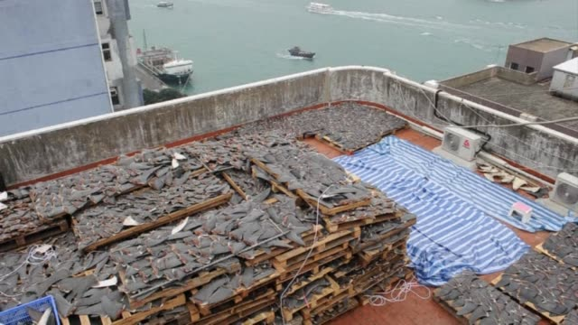 hong kong conservationists express outrage after images emerged of a factory rooftop covered in thousands of freshly sliced shark fins as they call... - rinnsteinkante stock-videos und b-roll-filmmaterial