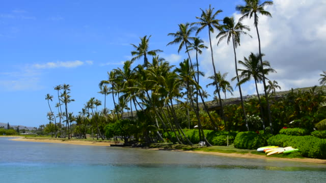 stockvideo's en b-roll-footage met honolulu hawaii oahu palms at maunalua bay in south oahu relaxing cove - oahu