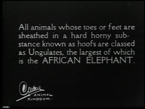 hoofs and horns - 1 of 14 - andere clips dieser aufnahmen anzeigen 2344 stock-videos und b-roll-filmmaterial
