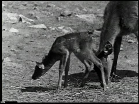 hoofs and horns - 12 of 14 - この撮影のクリップをもっと見る 2344点の映像素材/bロール