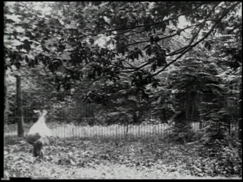 hoofs and horns - 13 of 14 - andere clips dieser aufnahmen anzeigen 2344 stock-videos und b-roll-filmmaterial