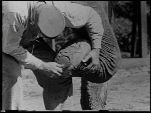 hoofs and horns - 2 of 14 - この撮影のクリップをもっと見る 2344点の映像素材/bロール