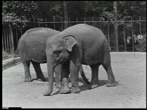 hoofs and horns - 4 of 14 - andere clips dieser aufnahmen anzeigen 2344 stock-videos und b-roll-filmmaterial