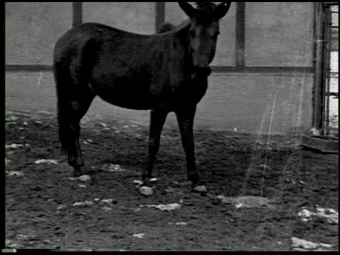 hoofs and horns - 6 of 14 - andere clips dieser aufnahmen anzeigen 2344 stock-videos und b-roll-filmmaterial