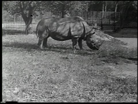 hoofs and horns - 7 of 14 - andere clips dieser aufnahmen anzeigen 2344 stock-videos und b-roll-filmmaterial