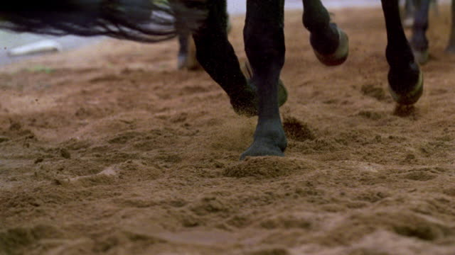 stockvideo's en b-roll-footage met ms hoofs of approaching horses - onder