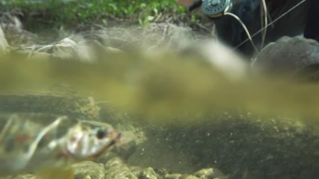vídeos y material grabado en eventos de stock de enganchado pescados luchas contra línea como pescador se arrodilla en la orilla - caña de pescar