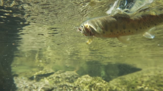 hooked fish swims underwater - hook stock videos and b-roll footage
