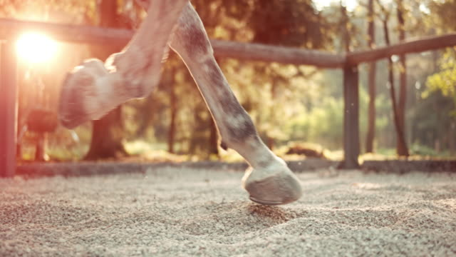 SLO MO LD Hooves of a cantering horse at sunrise