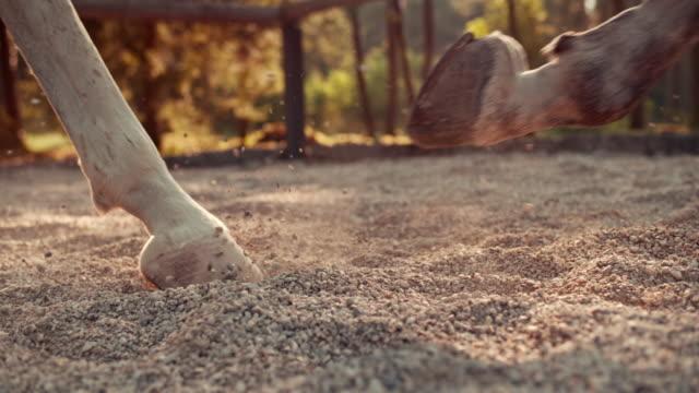 vídeos de stock e filmes b-roll de slo mo ds hooves de um cavalo branco cantering - cavalo família do cavalo