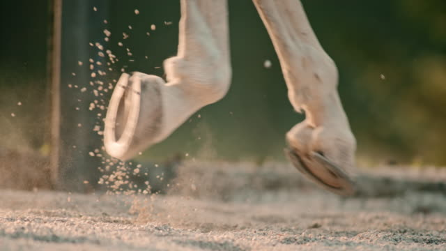 slo mo hooves of a galloping horse - horseshoe stock videos and b-roll footage