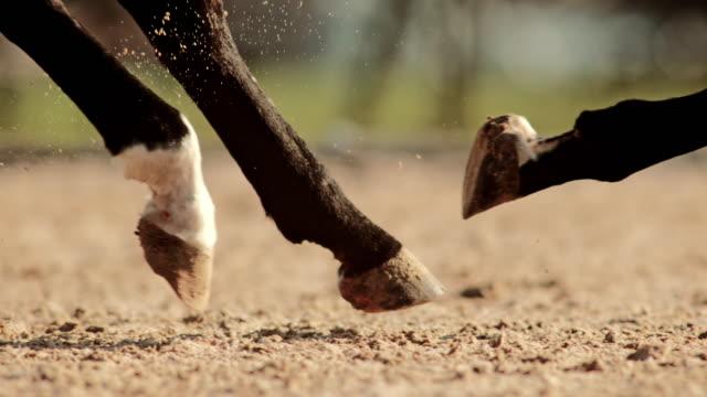 slo mo ts hooves eines galoppierenden pferdes - huf stock-videos und b-roll-filmmaterial