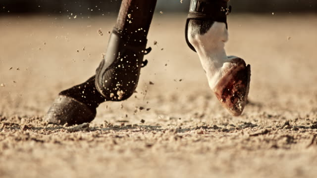slo mo ts hooves of a horse running in sunny arena - low section stock videos & royalty-free footage