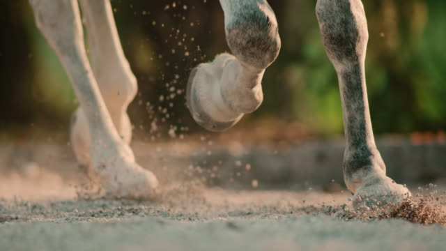 SLO MO Hooves of a horse trotting in sand