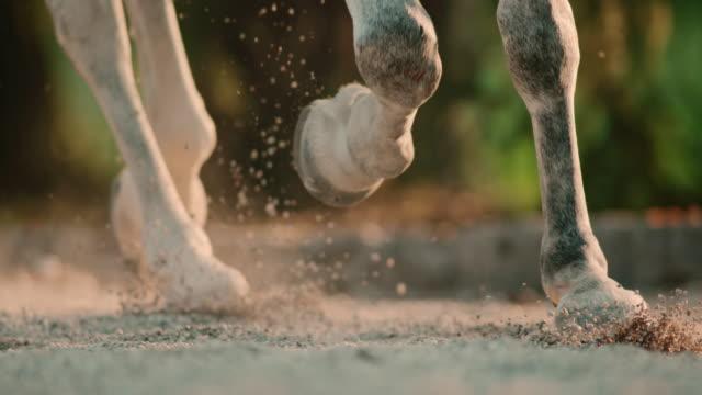 slo mo hufen des pferdes trotting im sand - huf stock-videos und b-roll-filmmaterial