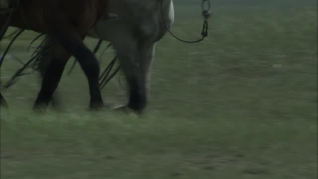 Hooves of horses trot across grassland, Bayanbulak grasslands.