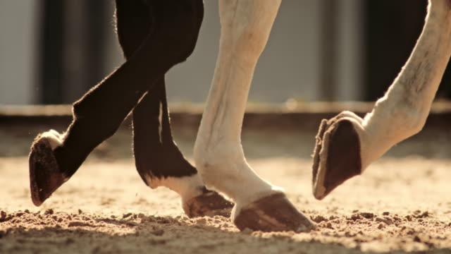 vidéos et rushes de slo mo ts sabots de deux chevaux marchant dans l'arène - sabot