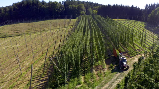 hop harvest in late summer - bavaria stock videos & royalty-free footage