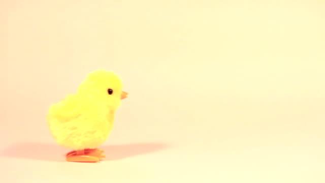 hopping easter chicken - fågelunge bildbanksvideor och videomaterial från bakom kulisserna