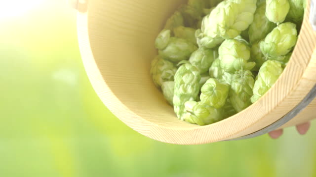 hops cones falling out from the wooden bucket in 4k slow motion - pine cone stock videos and b-roll footage