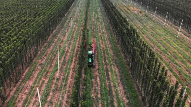 hops field - from hops to beer - hops crop stock videos and b-roll footage