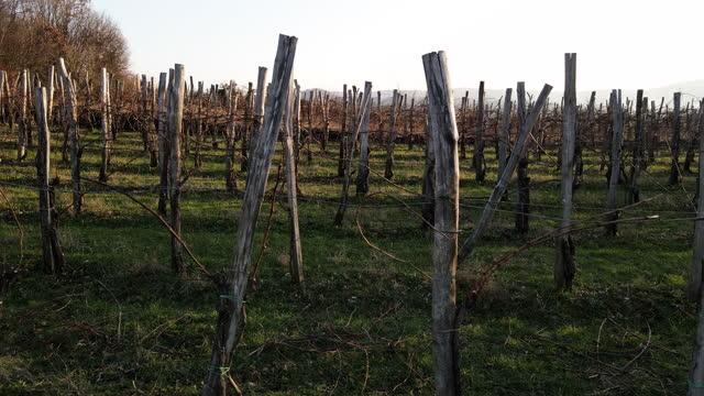 stockvideo's en b-roll-footage met horizontale dia tussen wijngaardrijen - dia