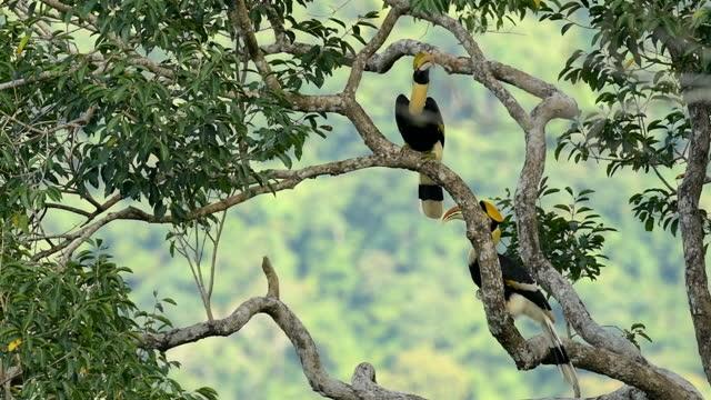 hornbill in der natur,slow motion - größter stock-videos und b-roll-filmmaterial