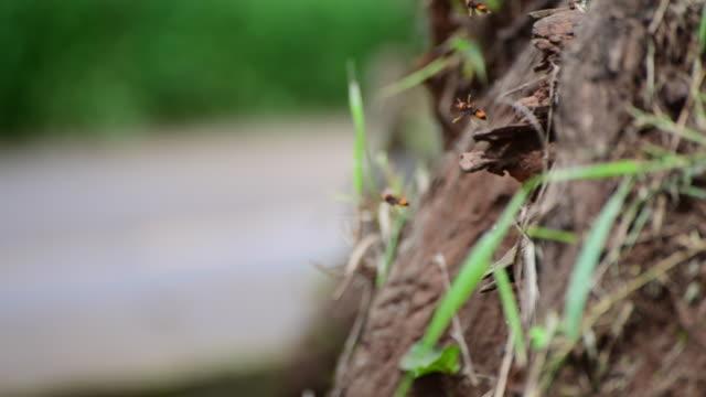 stockvideo's en b-roll-footage met hornet - voelspriet