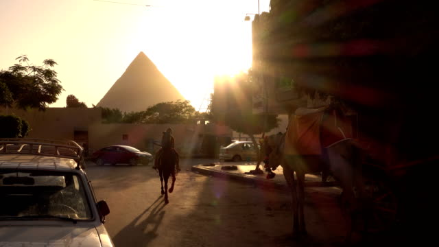 horse and camel carriage in giza, cairo, egypt - street style stock videos & royalty-free footage