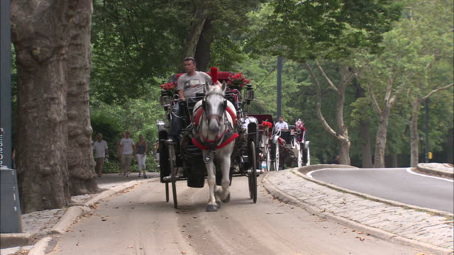 ws horse and carriage at central park / new york city, new york, usa       - animale da lavoro video stock e b–roll
