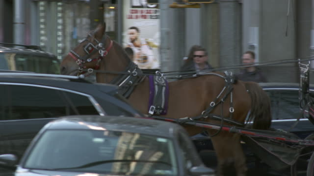 vidéos et rushes de horse and carriage in traffic in manhattan - voiture attelée