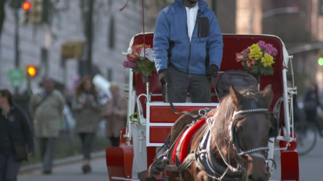 Horse and carriage on city street in Autumn