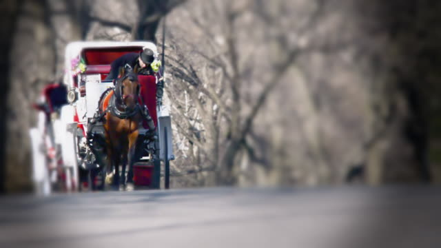 vídeos y material grabado en eventos de stock de a horse and carriage travel through central park - carruaje