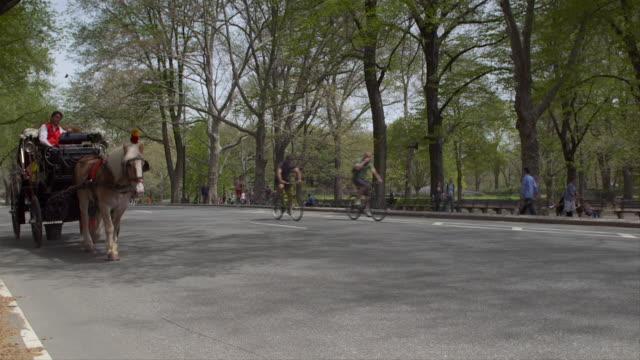 vídeos de stock, filmes e b-roll de a horse and carriage travels through central park.  bikers travel through the park.  slow motion - artigo de vestuário para cabeça