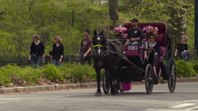 vídeos de stock, filmes e b-roll de a horse and carriage travels through central park. - artigo de vestuário para cabeça