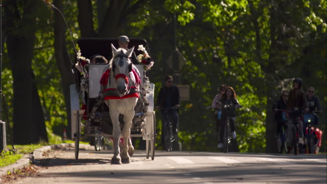horse and carriage trotting along street in slow motion in central park - kutsche stock-videos und b-roll-filmmaterial