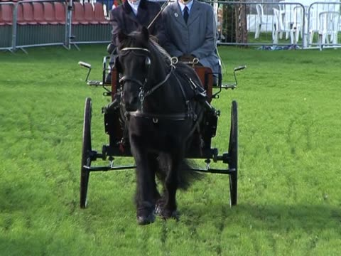vídeos y material grabado en eventos de stock de hors'and carriage - galopar