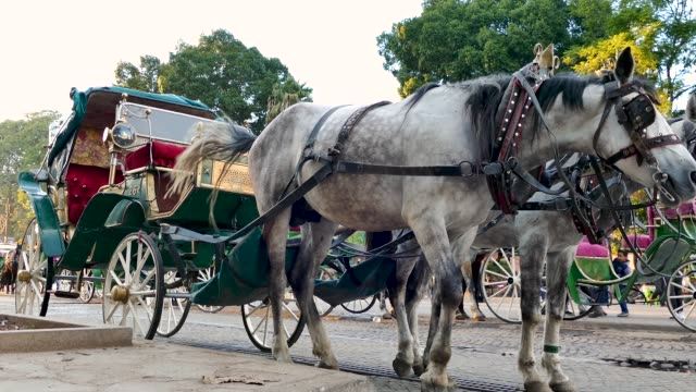 stockvideo's en b-roll-footage met horse and cart tourist transportation travel vacation marrakesh morocco - werkdier