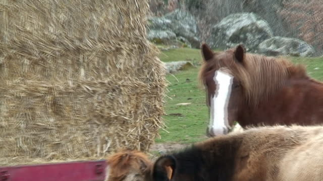 Horse and cows eating