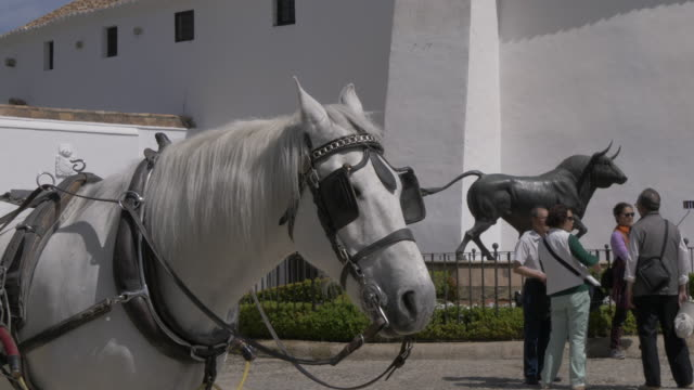 Horse and external view of Bullring of the Royal Cavalry of Ronda, Ronda, Andalucia, Spain, Europe