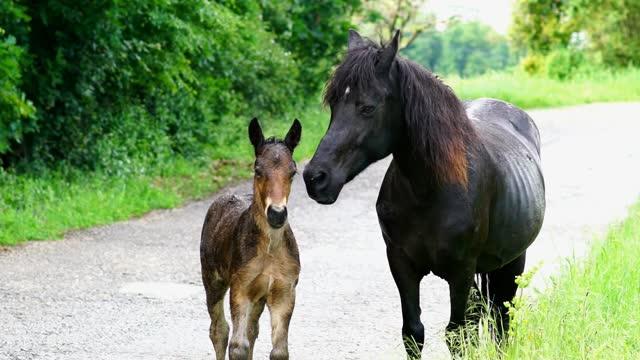 馬と子馬の接近 - 子馬点の映像素材/bロール
