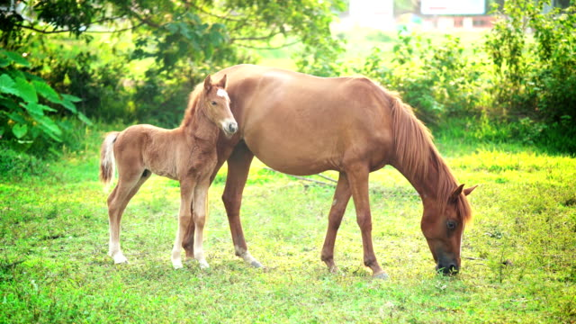 馬と子馬緑の野原で。 - 子馬点の映像素材/bロール